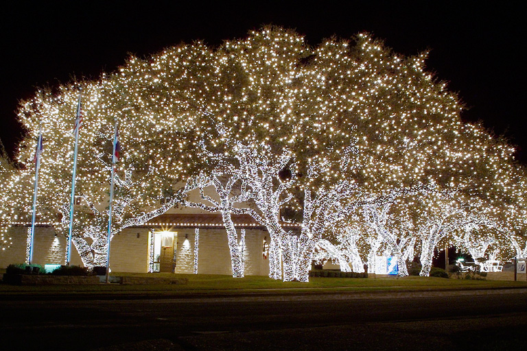 Pedernales Electric Cooperative Trees