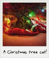 A Christmas tree cat!